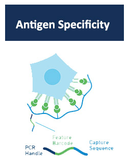 Antigen Specificity
